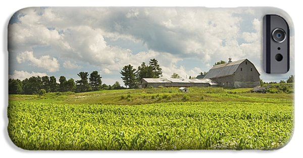 Corn iPhone Cases - Corn Growing In Maine Farm Field iPhone Case by Keith Webber Jr