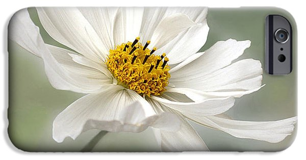White Daisies iPhone Cases - Cosmos Flower in White iPhone Case by Kaye Menner