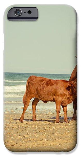 cows on sea coast iPhone Case by Raimond Klavins