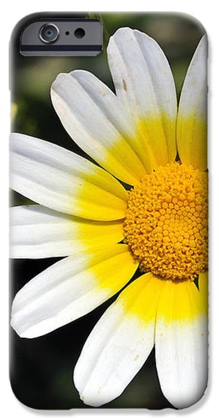 Crown daisy flower iPhone Case by George Atsametakis