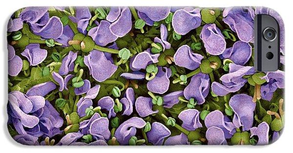 D.c. iPhone Cases - Cryptotaenia Japonica Hassk Flowers, Sem iPhone Case by Susumu Nishinaga