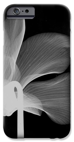 Cyclamen Flower X-ray iPhone Case by Bert Myers