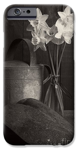 Shed iPhone Cases - Daffodils iPhone Case by Edward Fielding