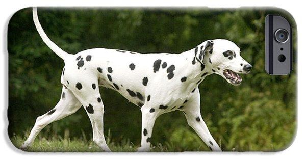 Dog Trots Photographs iPhone Cases - Dalmatian Dog iPhone Case by Jean-Michel Labat