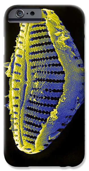 Phytoplankton iPhone Cases - Diatom iPhone Case by David M. Phillips