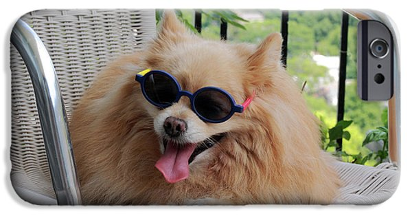 Lazy Dog iPhone Cases - Dog in Summer iPhone Case by Charline Xia