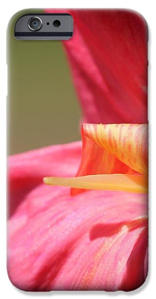 Dwarf Canna Lily named Shining Pink iPhone Case by J McCombie
