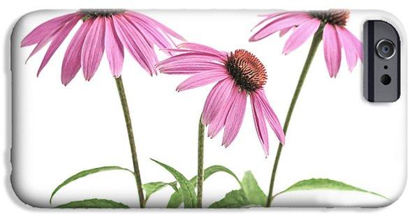Echinacea iPhone Cases - Echinacea purpurea flowers iPhone Case by Elena Elisseeva