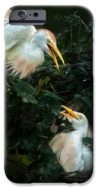 Cattle Egret iPhone Cases - Egrets iPhone Case by Rick Barnard