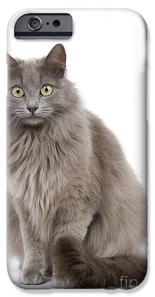 Gray Hair iPhone Cases - European Blue Cat iPhone Case by Jean-Michel Labat