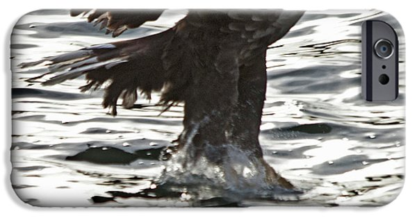 Norway iPhone Cases - European Fishing Sea Eagle 3 iPhone Case by Heiko Koehrer-Wagner