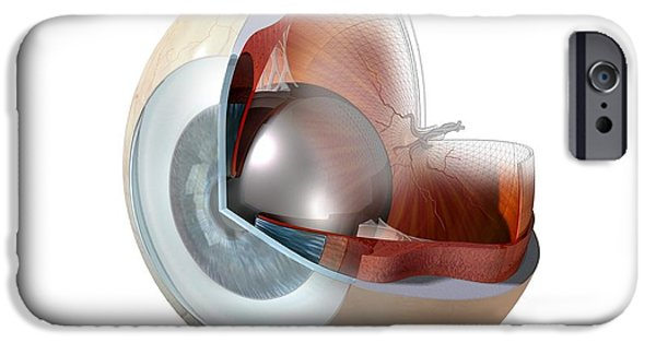Cut-outs iPhone Cases - Eye Anatomy, Artwork iPhone Case by Claus Lunau