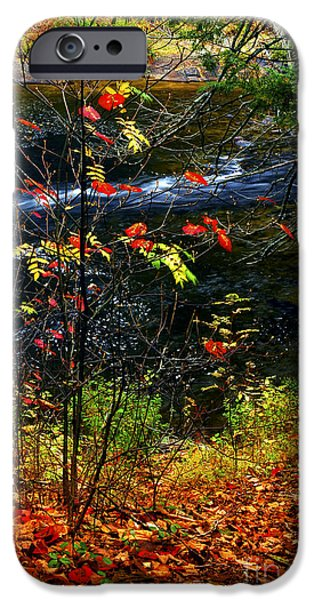 Creek iPhone Cases - Fall forest and river iPhone Case by Elena Elisseeva