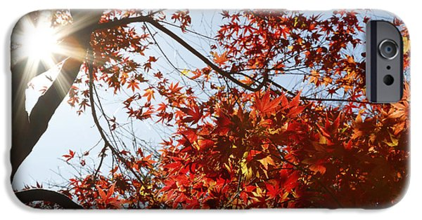 Red Photographs iPhone Cases - Fall forest iPhone Case by Les Cunliffe