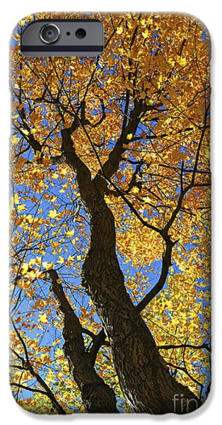 Autumn iPhone Cases - Fall maple trees iPhone Case by Elena Elisseeva