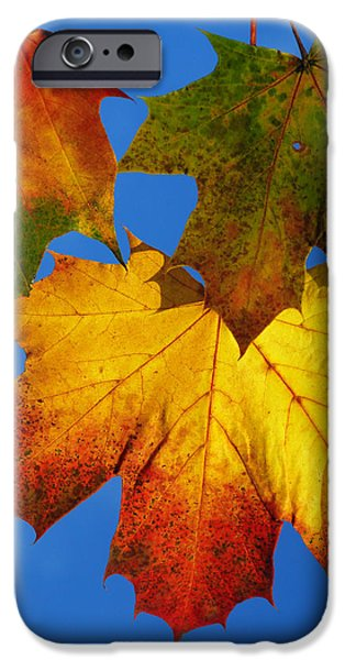 Flora iPhone Cases - Fall iPhone Case by TouTouke A Y