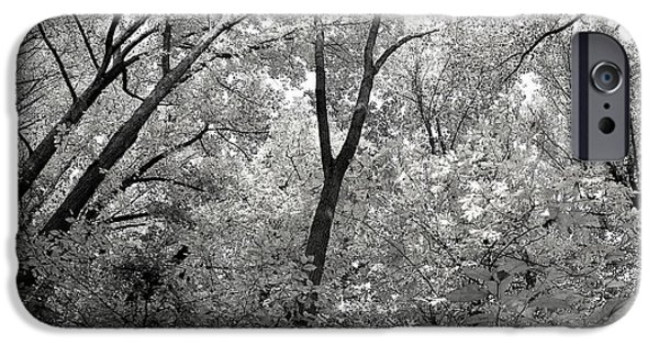 Haverford iPhone Cases - Fall Trees iPhone Case by Judy Gallagher