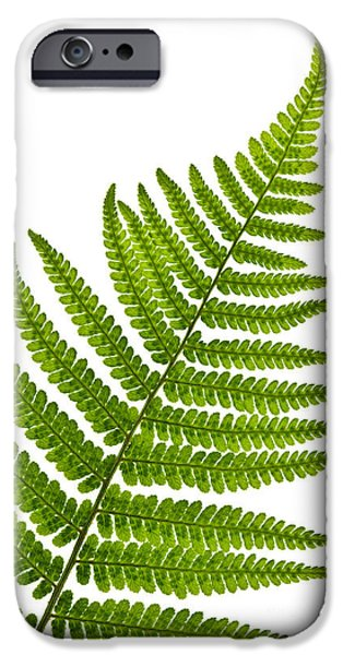 Flora Photographs iPhone Cases - Fern leaf iPhone Case by Elena Elisseeva