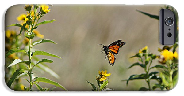 Wildlife Celebration iPhone Cases - Flight of the Monarch iPhone Case by Thomas Bomstad