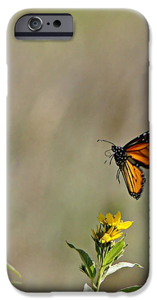Flight of the Monarch iPhone Case by Thomas Bomstad
