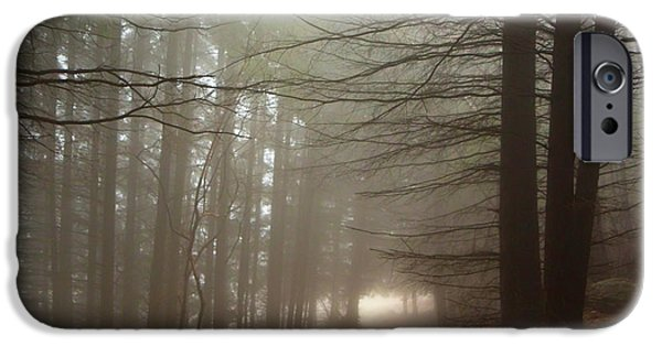 Pathway iPhone Cases - Foggy Pine Forest iPhone Case by Jivko Nakev