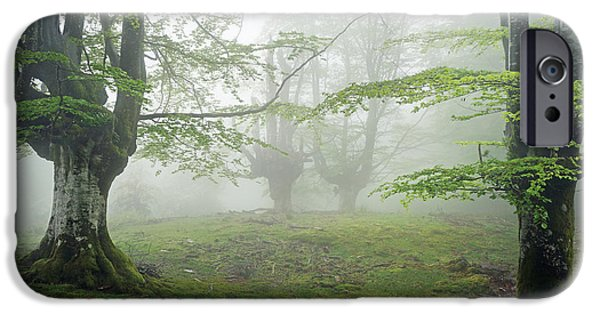 Fog Mist iPhone Cases - Forest With Fog In Spring iPhone Case by Mikel Martinez de Osaba