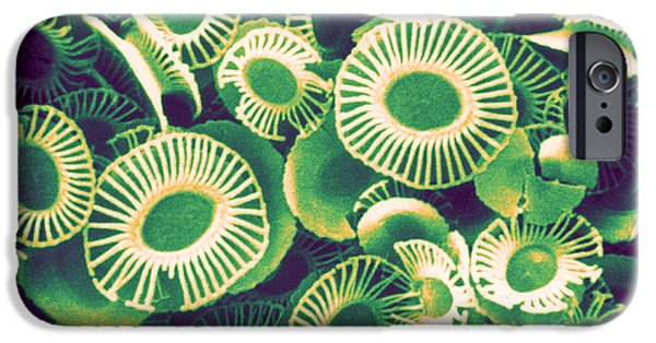 Calcareous Phytoplankton iPhone Cases - Fossilized Coccoliths, Emiliania iPhone Case by Biophoto Associates