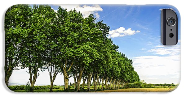 Tree. Sycamore iPhone Cases - French country road iPhone Case by Elena Elisseeva