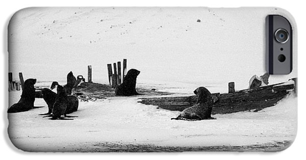 Historic Site iPhone Cases - fur seals and remains of old wooden whaling boats whalers bay deception island Antarctica iPhone Case by Joe Fox