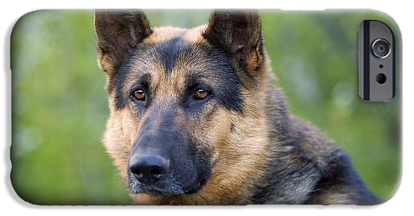 Dog Close-up iPhone Cases - German Shepherd iPhone Case by Rolf Kopfle