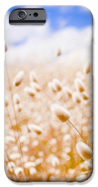 Fleurieu Peninsula iPhone Cases - Golden Field iPhone Case by Tim Hester