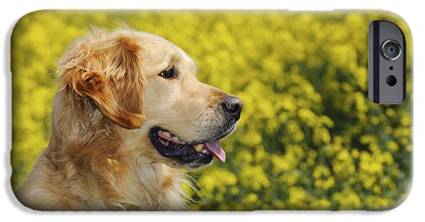Dog Close-up iPhone Cases - Golden Retriever And Flowers iPhone Case by John Daniels