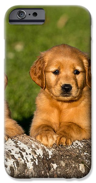 Golden Retriever Puppies iPhone Case by Linda Freshwaters Arndt