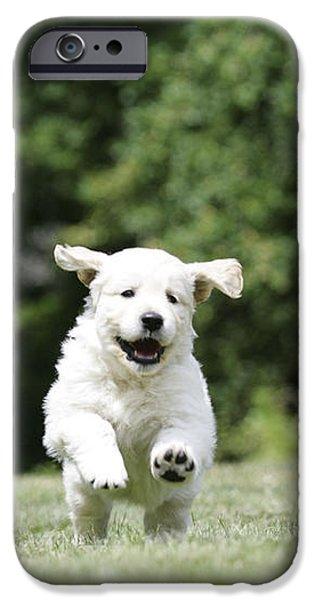 Golden Retriever Puppy iPhone Case by John Daniels
