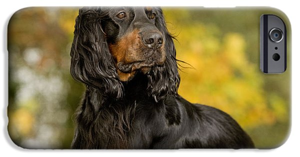 Gordon Setter iPhone Cases - Gordon Setter iPhone Case by Jean-Michel Labat