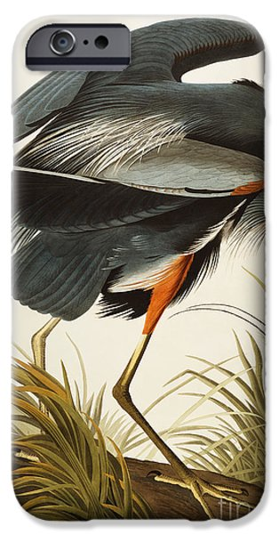 Ornithology iPhone Cases - Great Blue Heron iPhone Case by John James Audubon