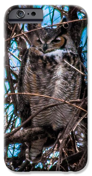Snake iPhone Cases - Great Horned Owl iPhone Case by Ronald Grogan