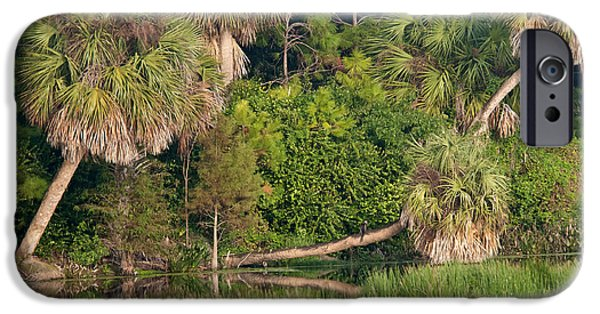 Nature Center iPhone Cases - Green Cay Wetlands, Fl iPhone Case by Mark Newman