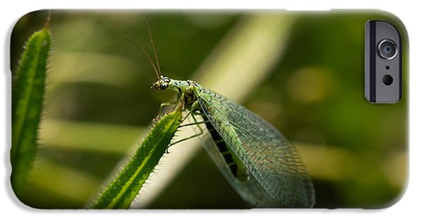 Insect iPhone Cases - Green Lacewing iPhone Case by Robert Carr