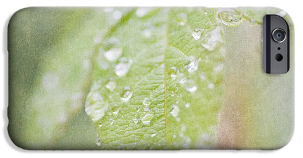Rainy Day iPhone Cases - Green leaves iPhone Case by Lars Hallstrom
