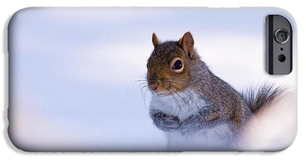 Sciurus Carolinensis iPhone Cases - Grey Squirrel In Snow iPhone Case by Jeff Sinon