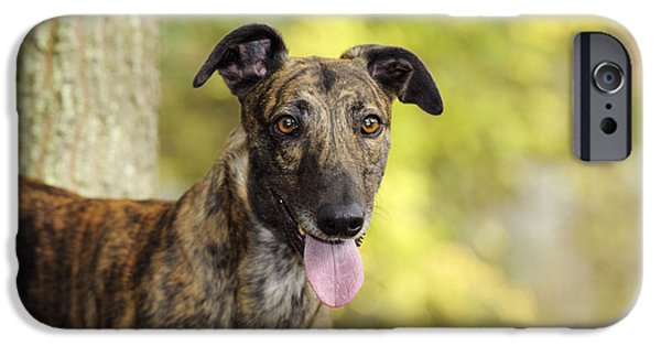 Dog Close-up iPhone Cases - Greyhound Dog iPhone Case by John Daniels