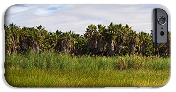 Baja iPhone Cases - Grove Of Mexican Fan Palm Washingtonia iPhone Case by Panoramic Images