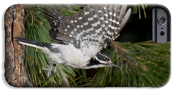 Hairy Woodpecker iPhone Cases - Hairy Woodpecker iPhone Case by Anthony Mercieca
