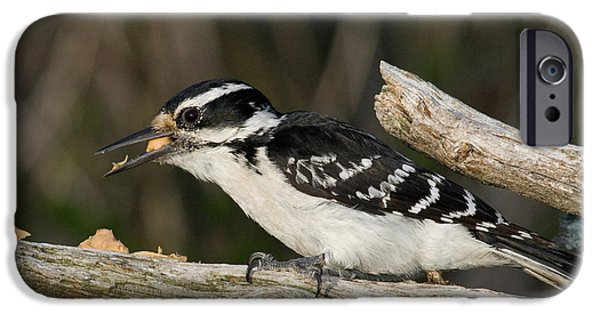 Hairy Woodpecker iPhone Cases - Hairy Woodpecker iPhone Case by Linda Freshwaters Arndt