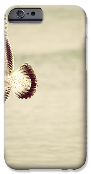 Herring Gull in Flight iPhone Case by Karol  Livote
