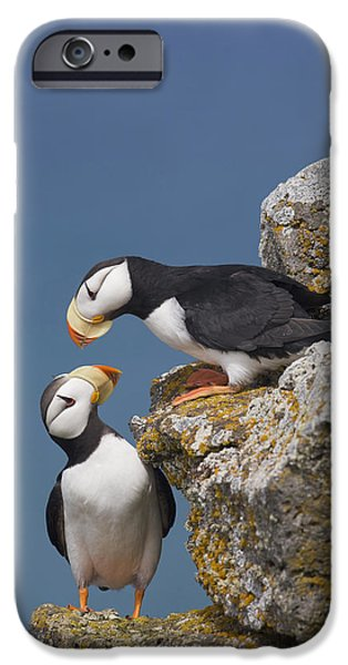 Ledge iPhone Cases - Horned Puffin Pair Perched On Rock iPhone Case by Milo Burcham