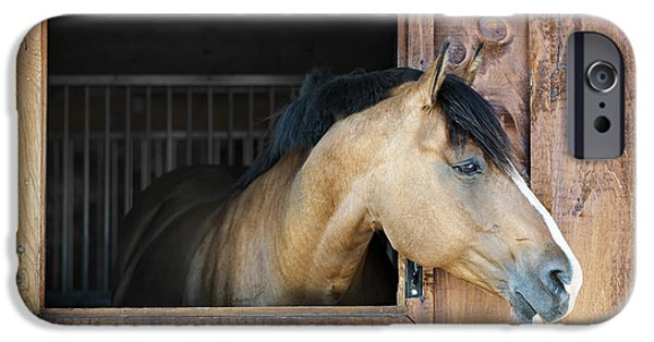One iPhone Cases - Horse in stable iPhone Case by Elena Elisseeva