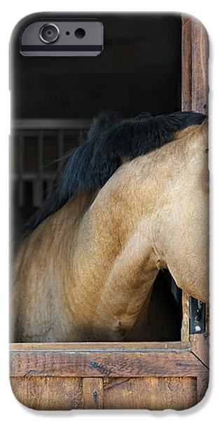 Horse in stable iPhone Case by Elena Elisseeva