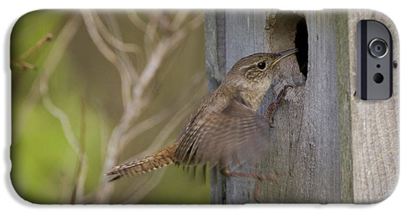 Wren iPhone Cases - House Wren iPhone Case by Linda Freshwaters Arndt